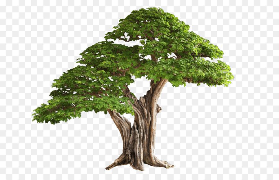 Descarga gratuita de árbol, Descargar, Imagen Digital imágenes PNG