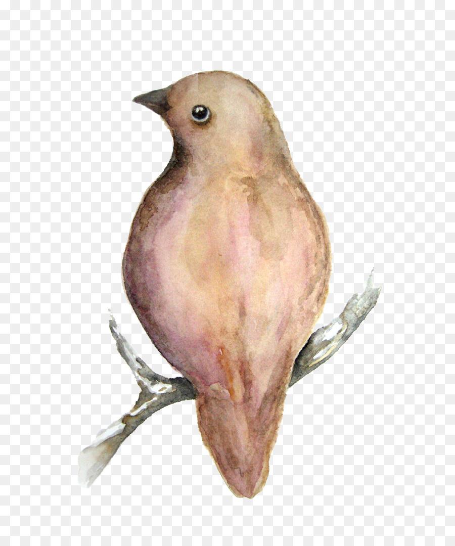 Descarga gratuita de Gorrión, Finch, Eurasia árbol De Gorrión imágenes PNG