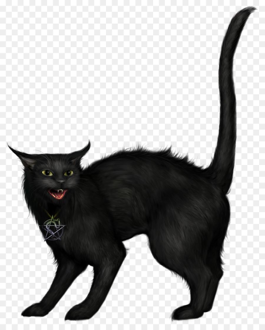Descarga gratuita de Gato, Gato Negro, Gatito imágenes PNG