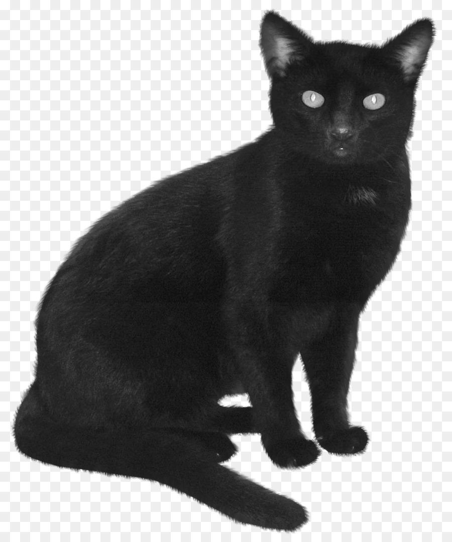 Descarga gratuita de Gato Himalaya, Gato Birmano, Gato Negro imágenes PNG