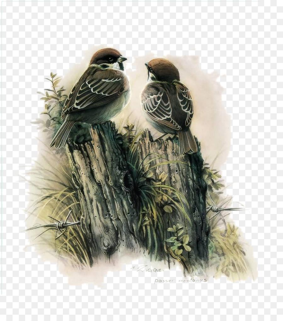 Descarga gratuita de Pájaro, Pintura, Decoupage imágenes PNG