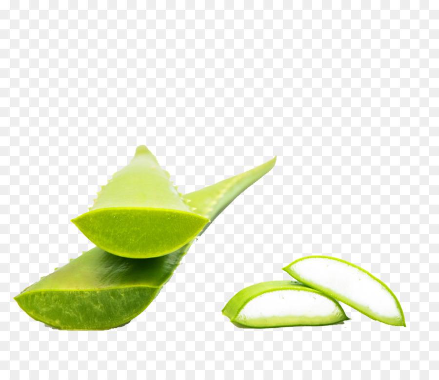 Descarga gratuita de Aloe Vera, Planta, Verde Imágen de Png