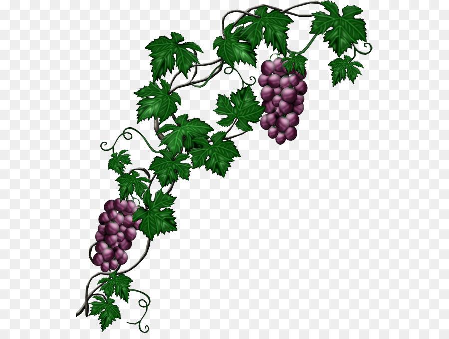 Descarga gratuita de Común De La Uva De La Vid, Uva, Planta Imágen de Png