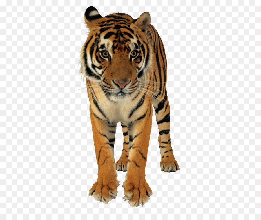 Descarga gratuita de León, Bangladesh, Tigre De Bengala Imágen de Png