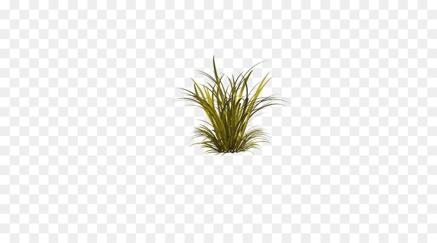 Descarga gratuita de Verde, Hoja, árbol imágenes PNG
