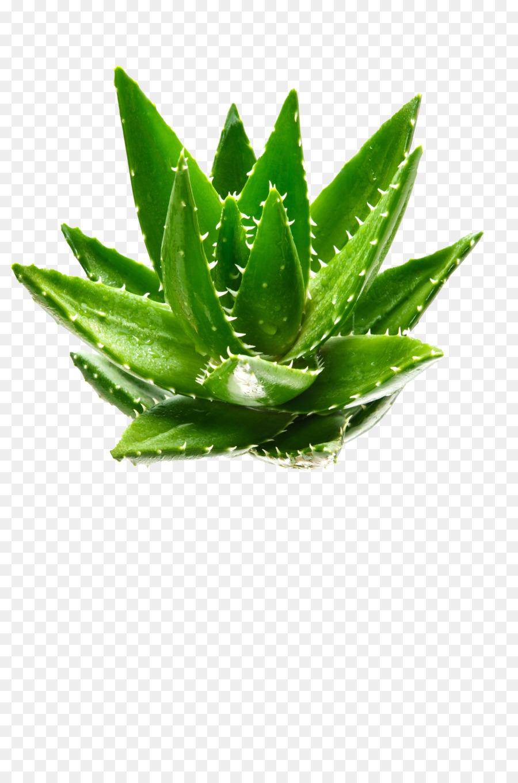 Descarga gratuita de Aloe Vera, Verde, Planta Imágen de Png