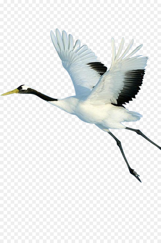 Descarga gratuita de Grúa, Pájaro, El Caracolero Imágen de Png