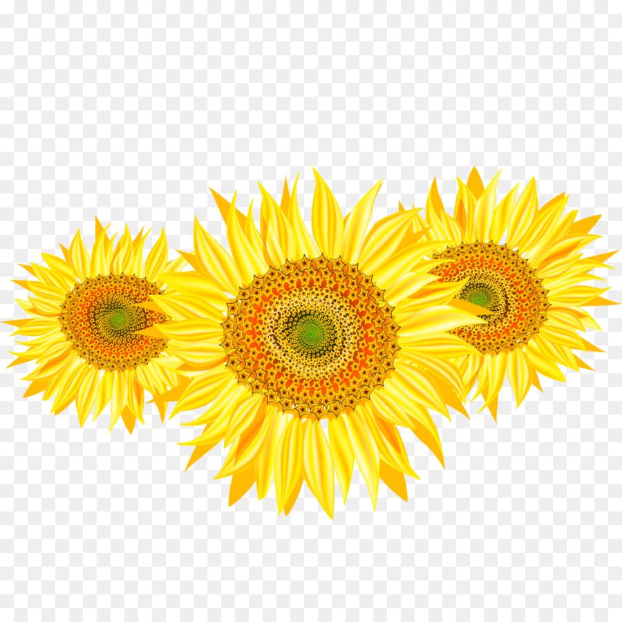 Descarga gratuita de Común De Girasol, Girasol, Flor Imágen de Png