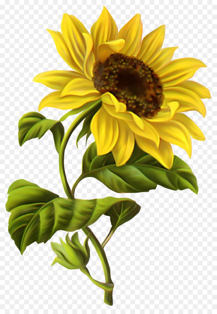 Descarga gratuita de Común De Girasol, Dibujo, Flor Imágen de Png