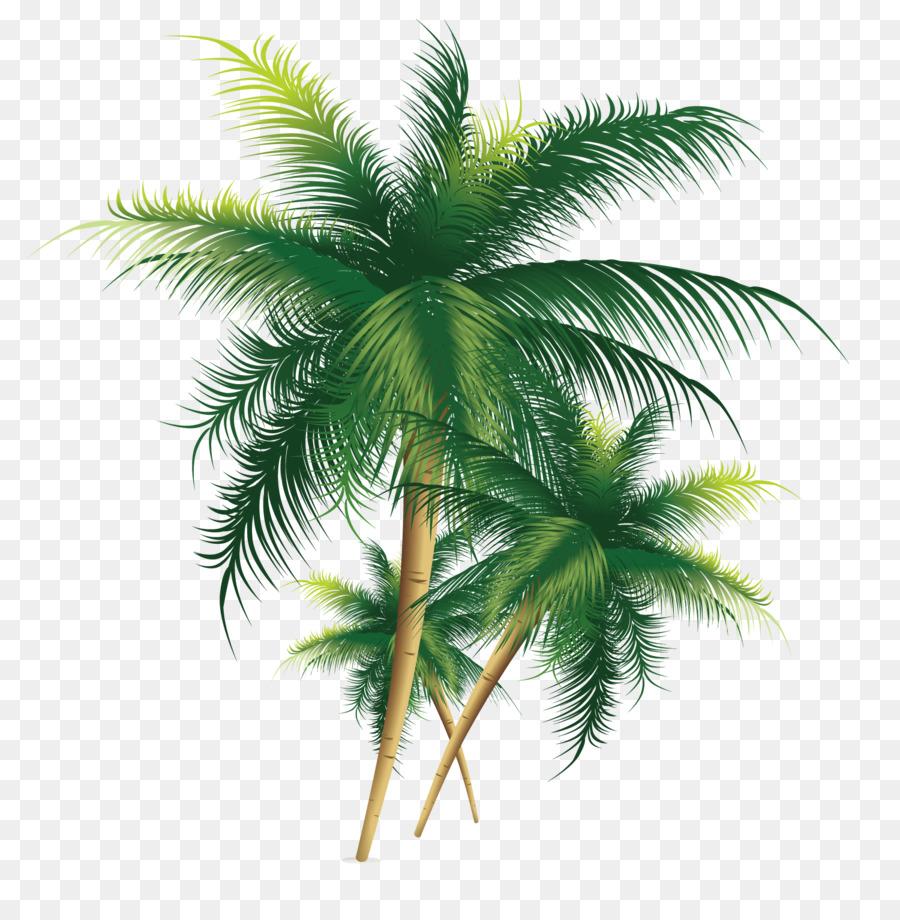 Descarga gratuita de Coco, árbol, Euclídea Del Vector imágenes PNG