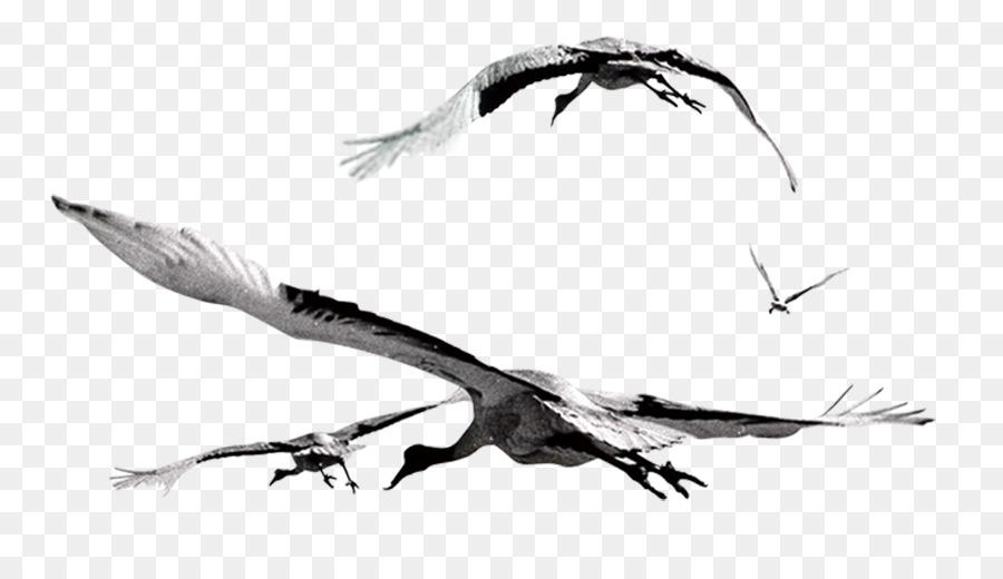 Descarga gratuita de Pájaro, Vuelo, Las Gaviotas imágenes PNG
