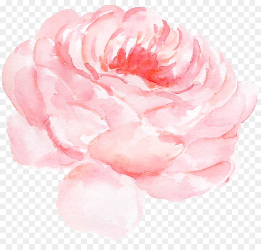 Descarga gratuita de Papel, Rosas Centifolia, Pintura A La Acuarela imágenes PNG