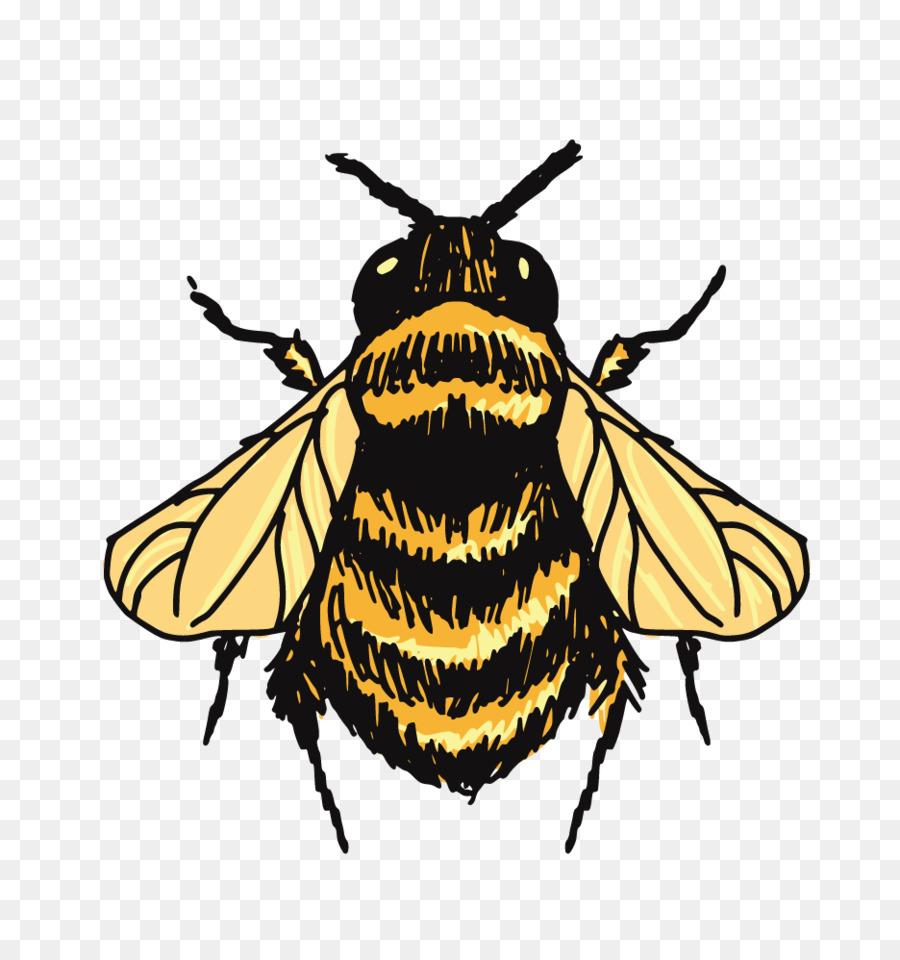 Descarga gratuita de Bumblebee, Abeja, Dibujo Imágen de Png