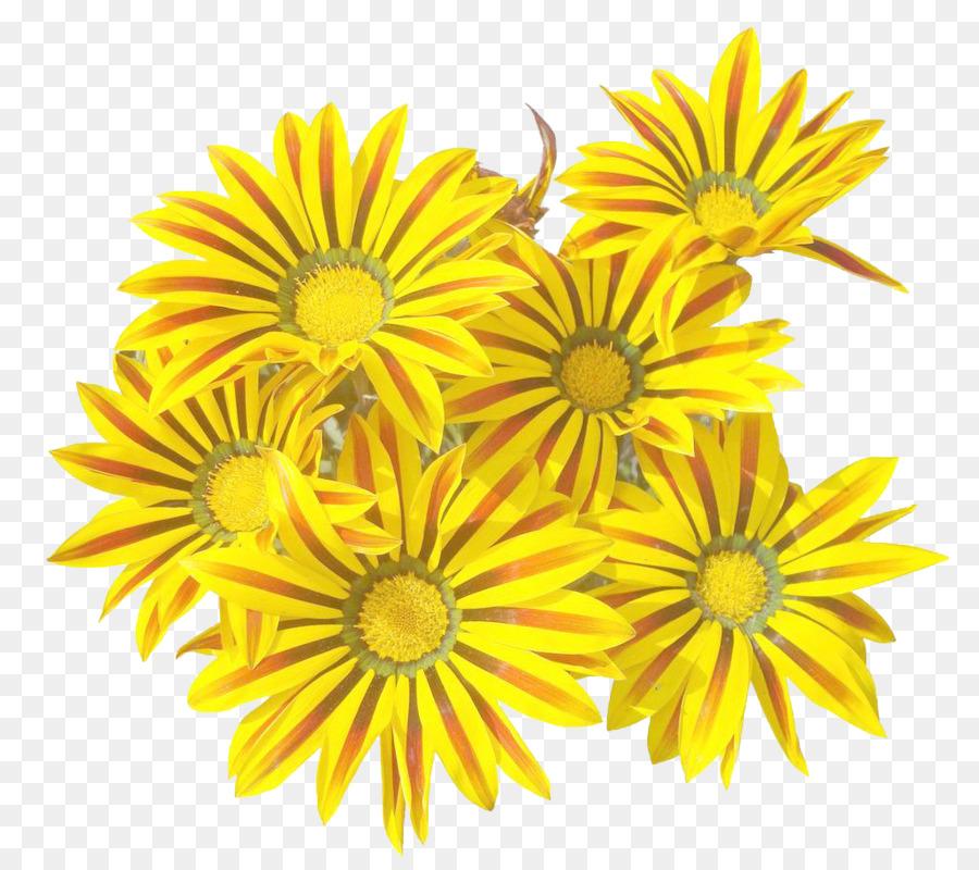 Descarga gratuita de Té De Crisantemo, Amarillo, Crisantemo imágenes PNG