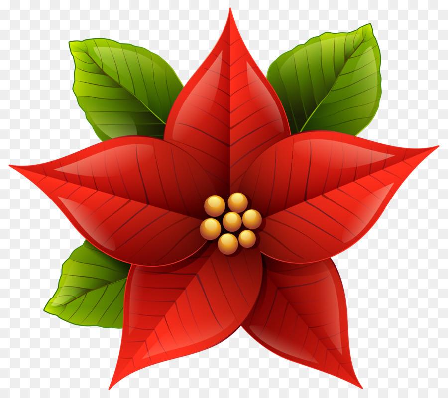 Descarga gratuita de La Flor De Pascua, La Navidad, Flor imágenes PNG