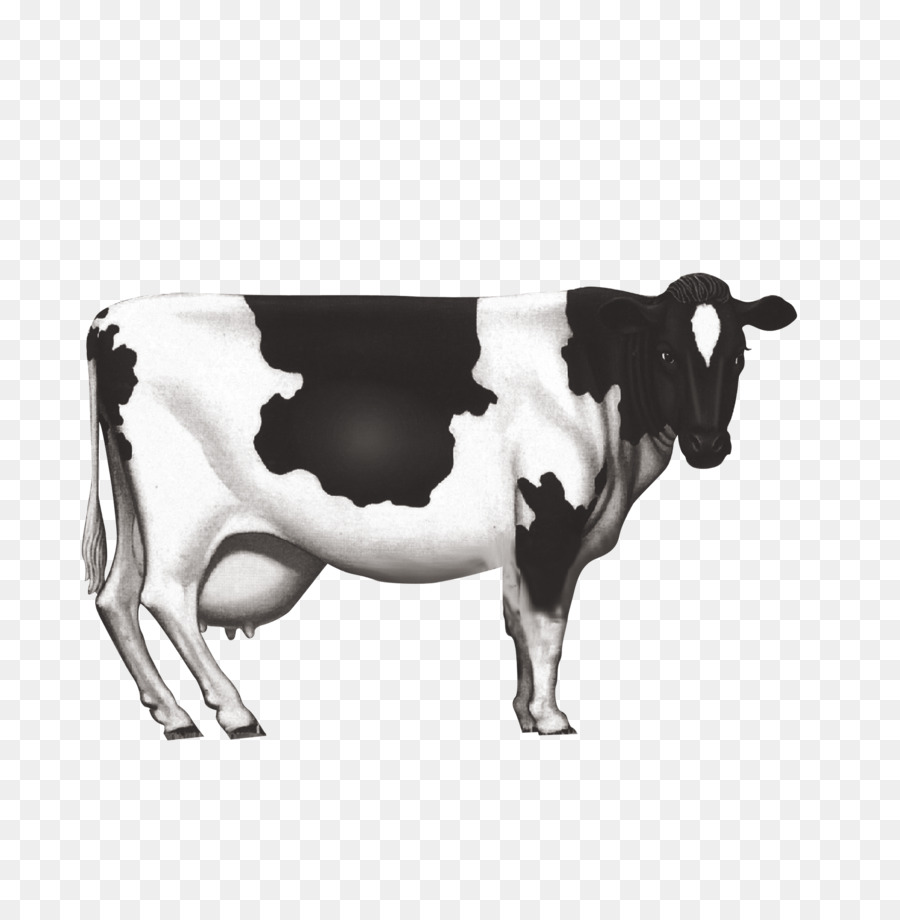 Descarga gratuita de Ganado Holstein Friesian, Ganado Lechero, La Leche imágenes PNG