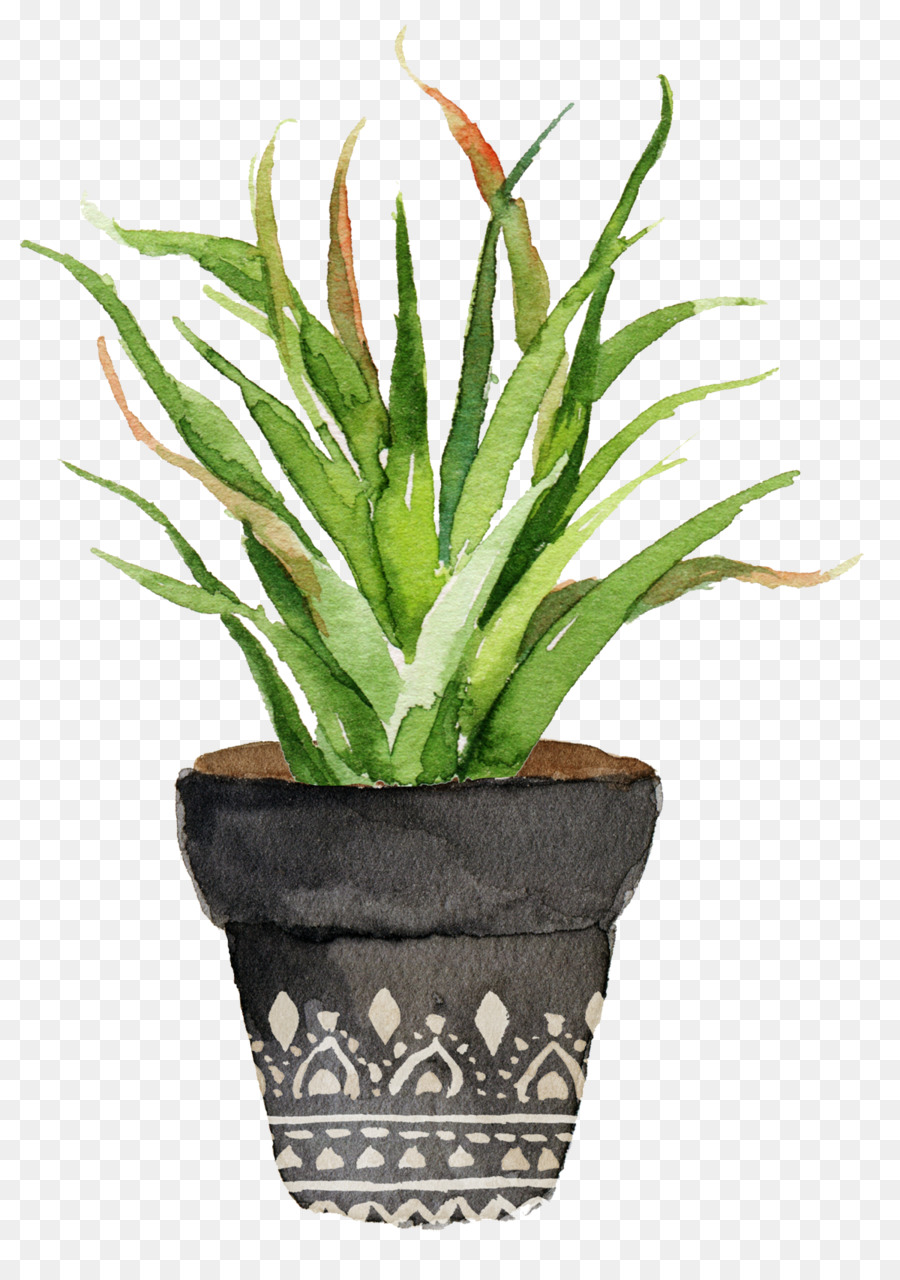 Descarga gratuita de Pintura A La Acuarela, Cactaceae, Pintura imágenes PNG