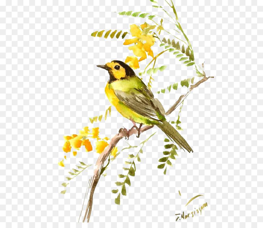 Descarga gratuita de Finch, Pájaro, Gorrión imágenes PNG