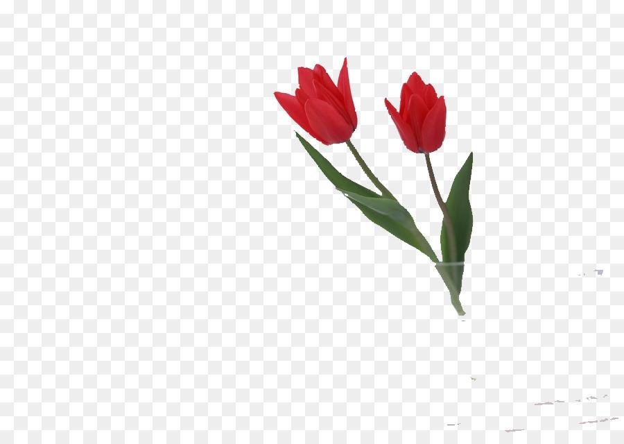 Descarga gratuita de Flor, Rosa, Tulip Imágen de Png