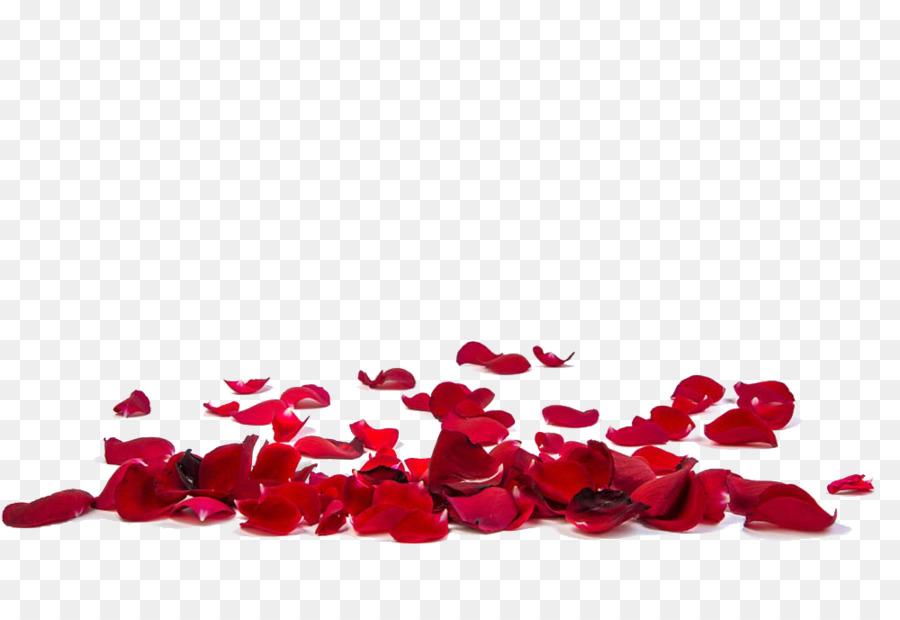 Descarga gratuita de Rosa, Pétalo, Una Fotografía De Stock Imágen de Png