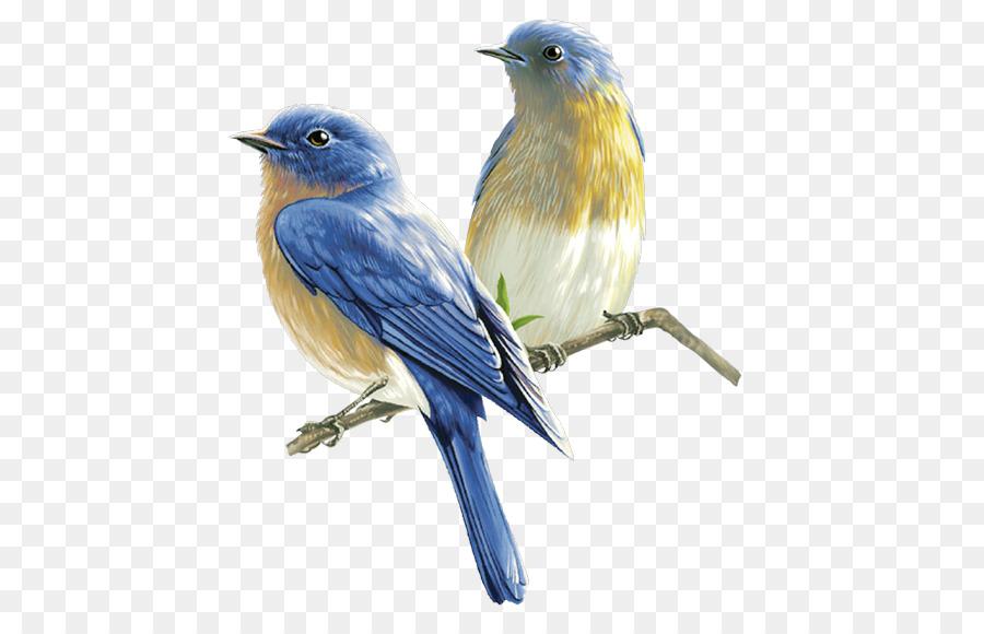 Descarga gratuita de Pájaro, Dibujo, Manipulación De La Foto imágenes PNG