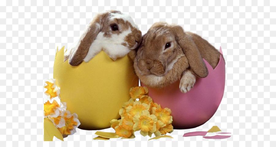 Descarga gratuita de Conejito De Pascua, Conejo Europeo, Pascua  imágenes PNG