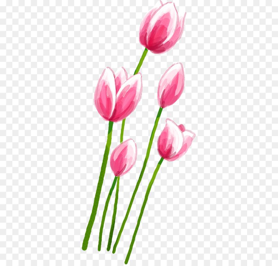 Descarga gratuita de Tulip, Rosa, Pétalo imágenes PNG
