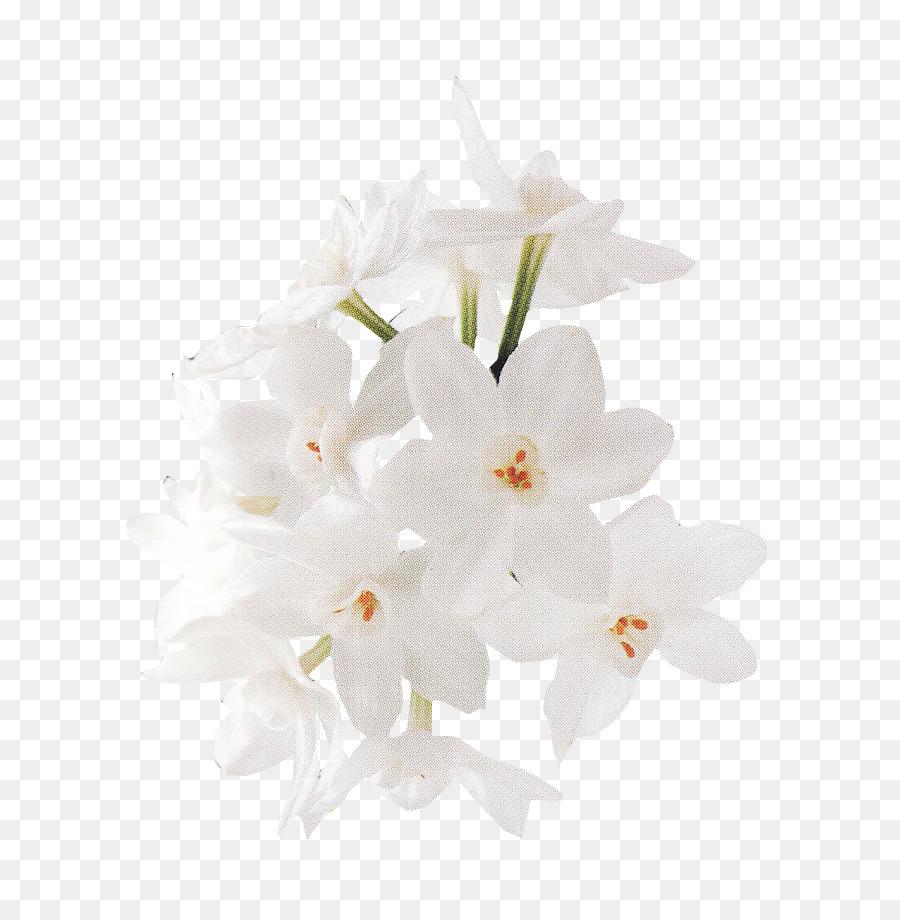 Descarga gratuita de Diseño Floral, Blanco, Flor imágenes PNG
