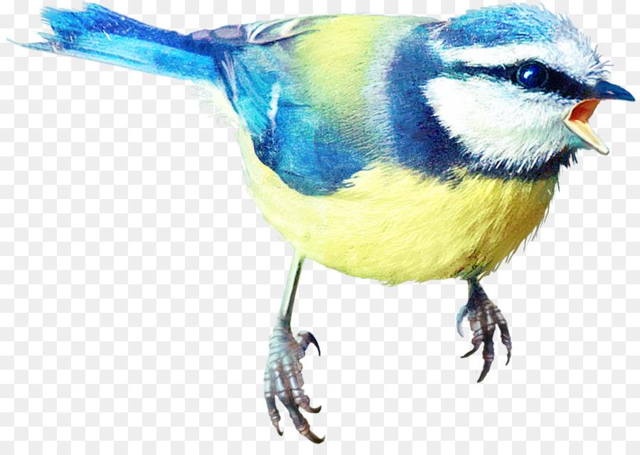 Descarga gratuita de Finch, Pájaro, Los Insectos imágenes PNG