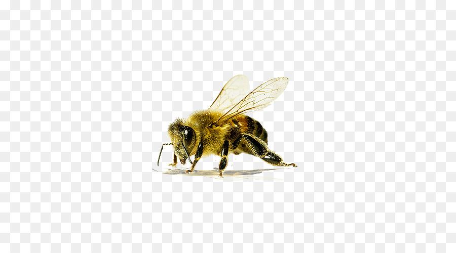 Descarga gratuita de El Oeste De La Miel De Abeja, Abeja, Los Insectos Imágen de Png