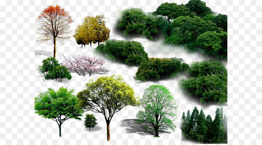 Descarga gratuita de árbol, Paisaje, La Plantación De árboles imágenes PNG