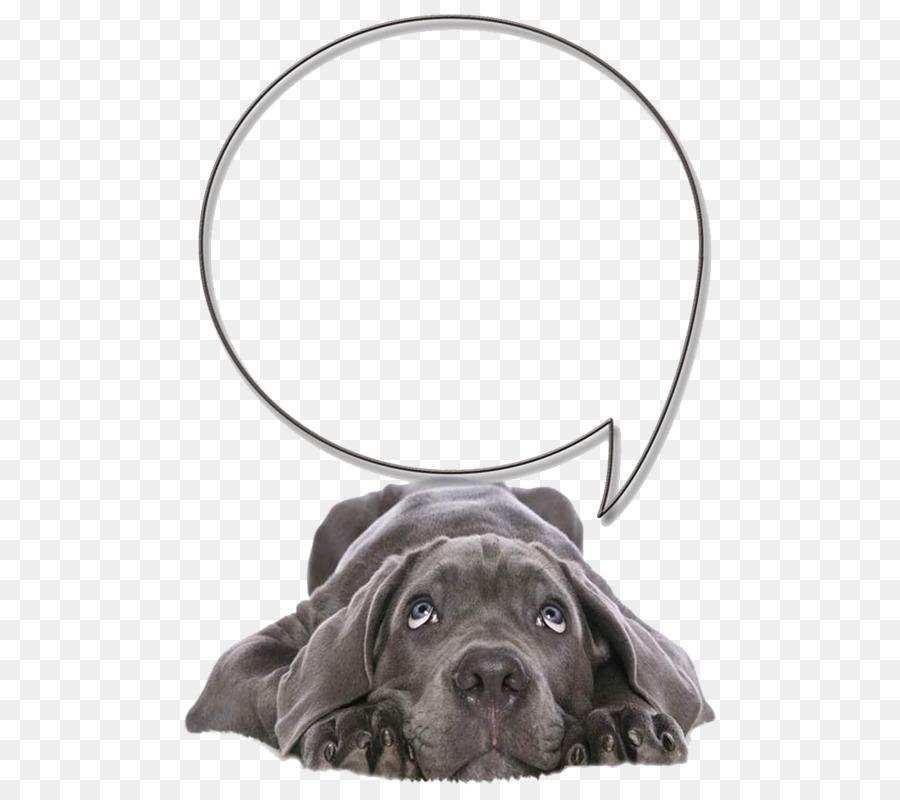 Descarga gratuita de Labrador Retriever, Cane Corso, Cuidado De Mascotas imágenes PNG