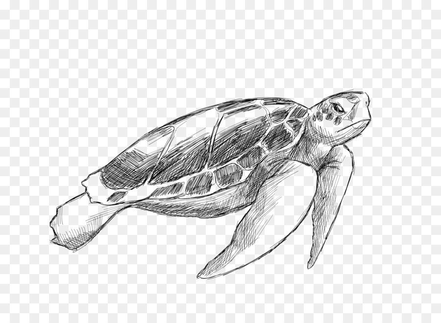 Tortuga De Mar, Dibujo, Animal Imagen Png