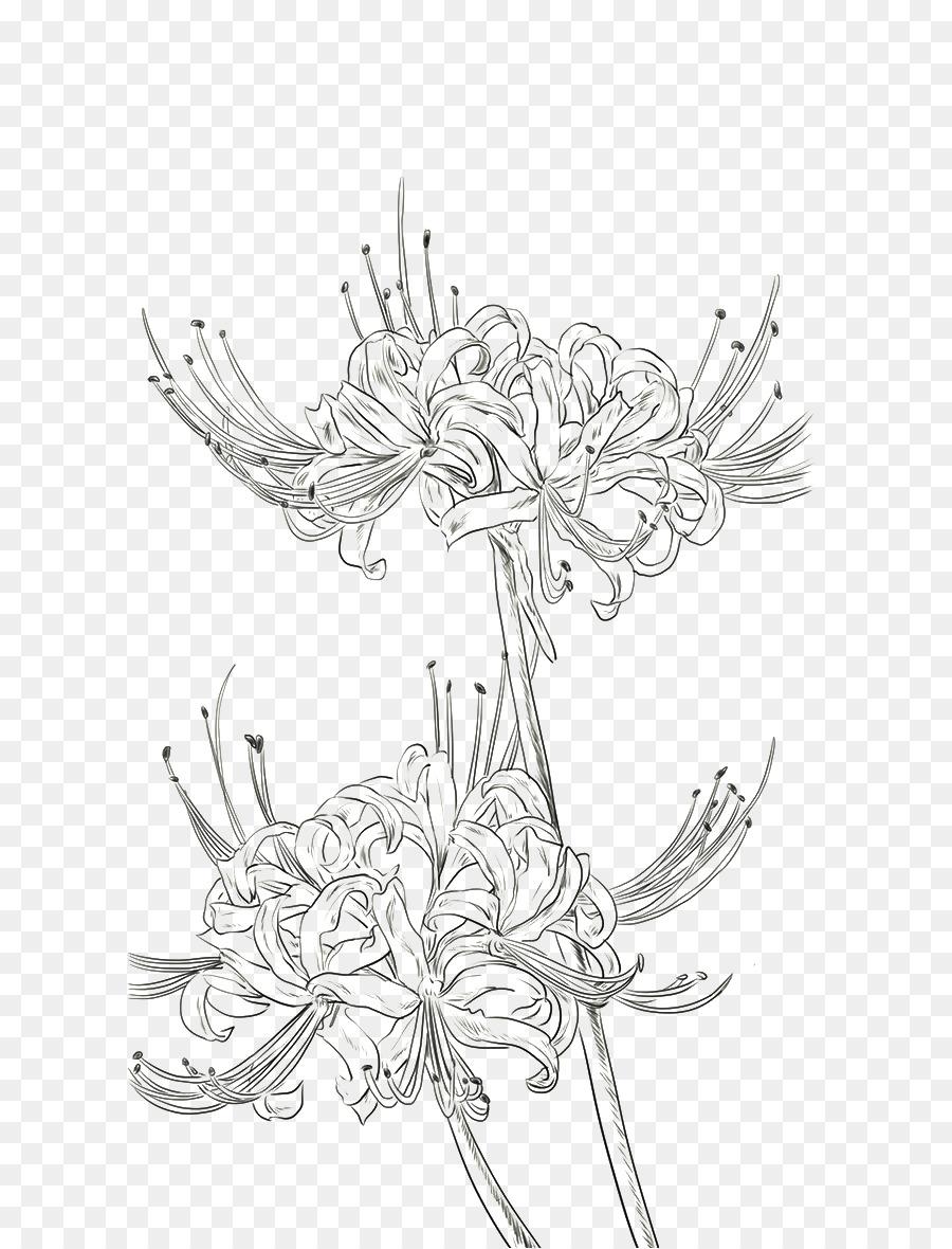 Descarga gratuita de Araña Roja Lily, Dibujo, Pintura A La Acuarela Imágen de Png