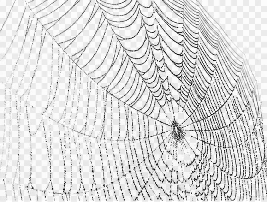 Descarga gratuita de Araña, Tela De Araña, La Seda De Araña Imágen de Png