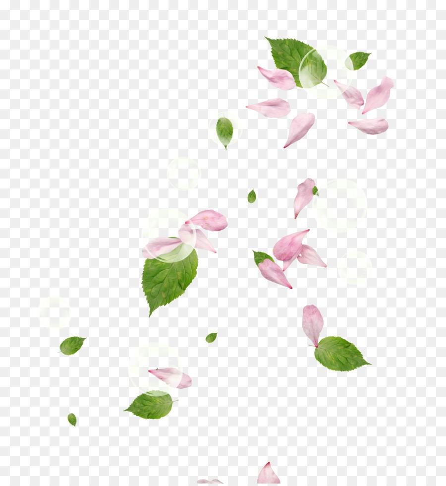Descarga gratuita de Pétalo, Flor, Rosa Imágen de Png