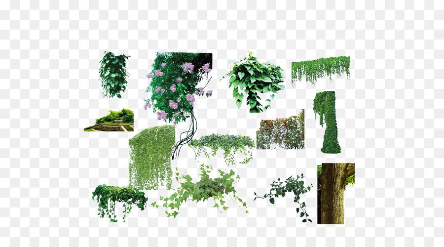 Descarga gratuita de árbol, Vid, Planta Imágen de Png