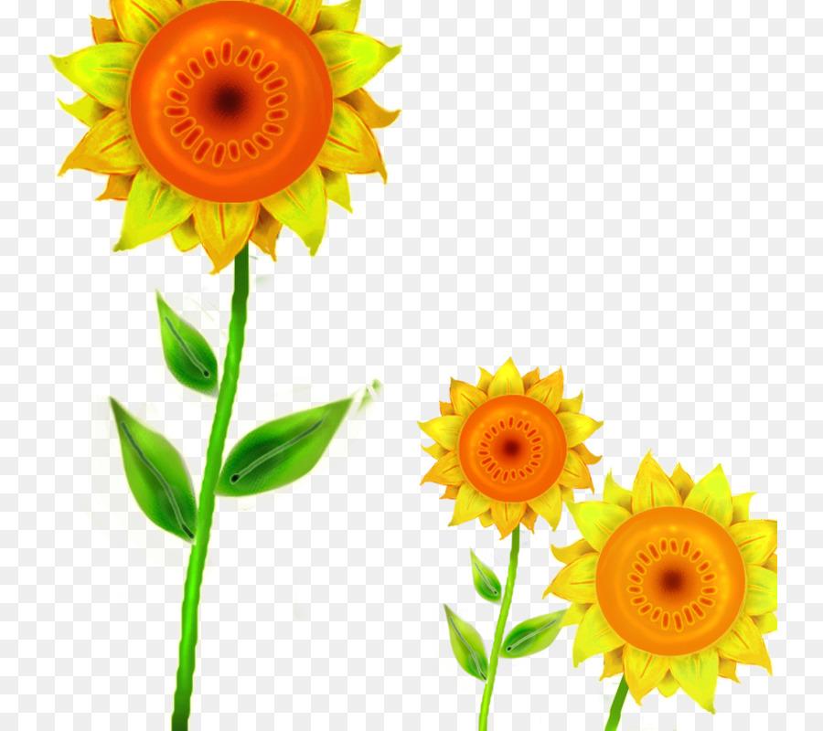 Descarga gratuita de Común De Girasol, Descargar, Transvaal Daisy Imágen de Png
