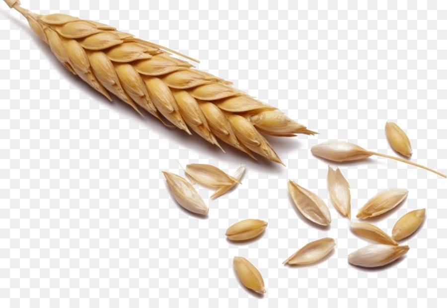Descarga gratuita de Trigo, Cereales, Malta imágenes PNG