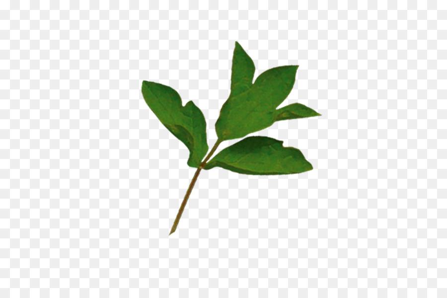 Descarga gratuita de Rama, Hoja, árbol imágenes PNG