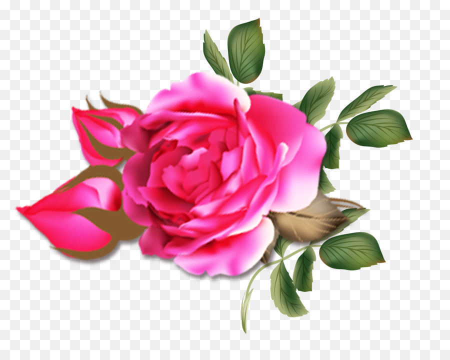 Descarga gratuita de Las Rosas De Jardín, Rosa Chinensis, Rosas Centifolia Imágen de Png