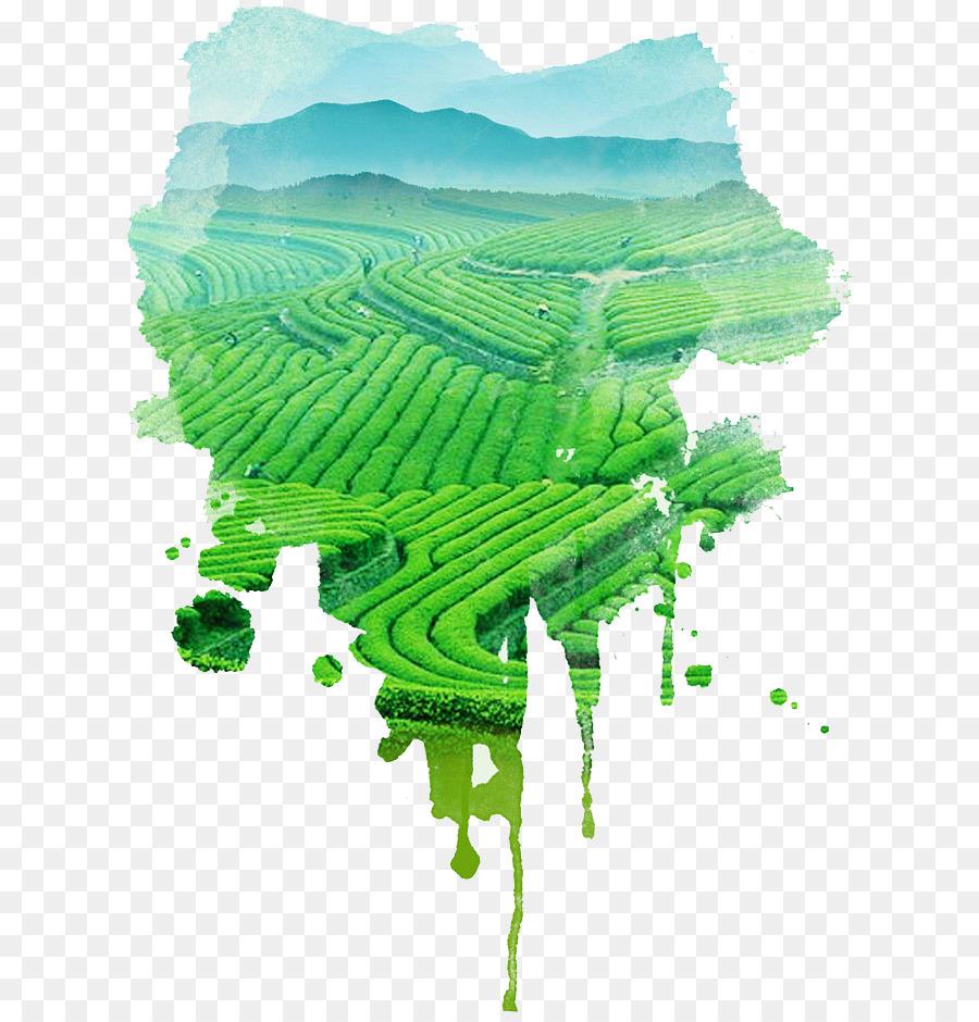 Descarga gratuita de Té, Té Verde, Jardín De Té Imágen de Png