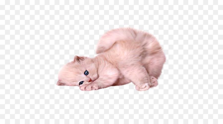 Descarga gratuita de Gato Persa, Gato Siamés, Gato Himalaya imágenes PNG