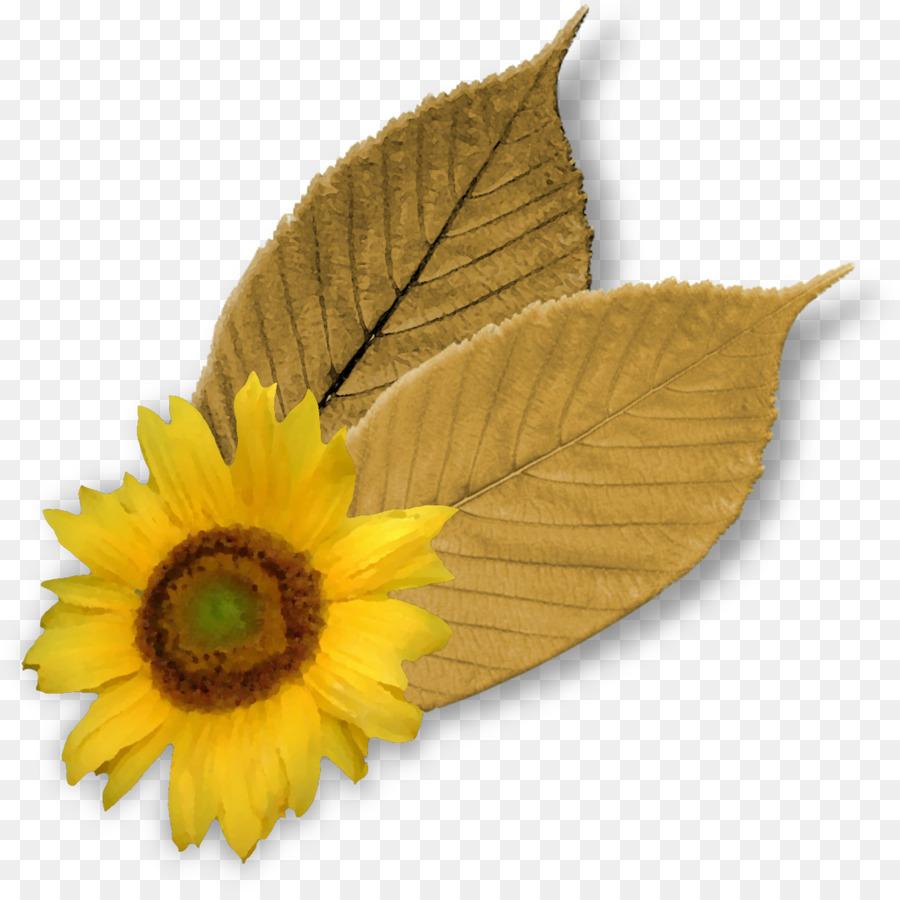 Descarga gratuita de Común De Girasol, Flor, Hoja Imágen de Png