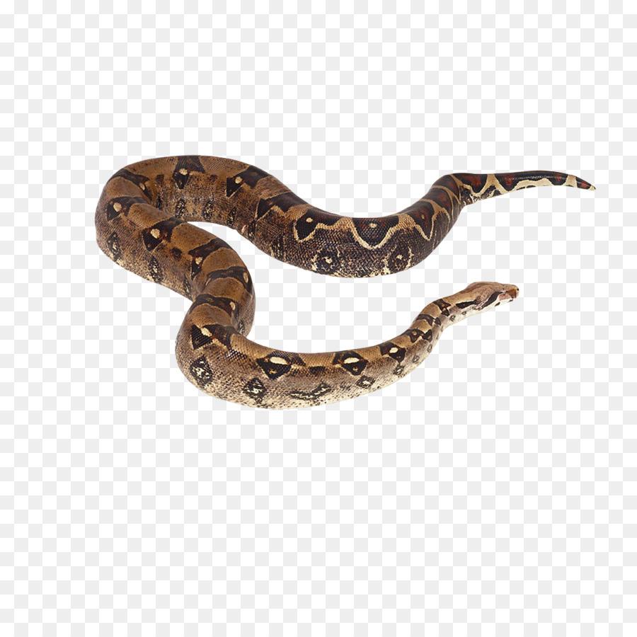 Descarga gratuita de Crotalus Cerastes, La Serpiente, Reptiles imágenes PNG