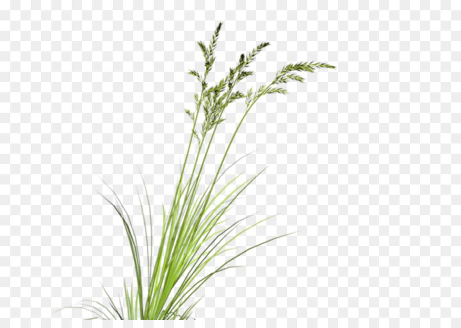 Descarga gratuita de Descargar, Planta, Las Imágenes De Google Imágen de Png
