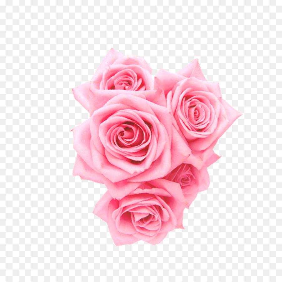 Descarga gratuita de Rosa Beach, Las Rosas De Jardín, Rosas Centifolia Imágen de Png