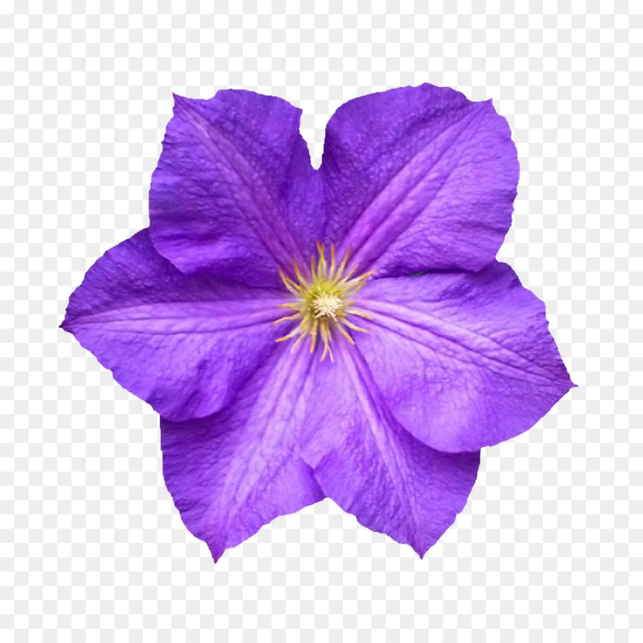 Descarga gratuita de Flor, Pétalo, Postscript Encapsulado imágenes PNG