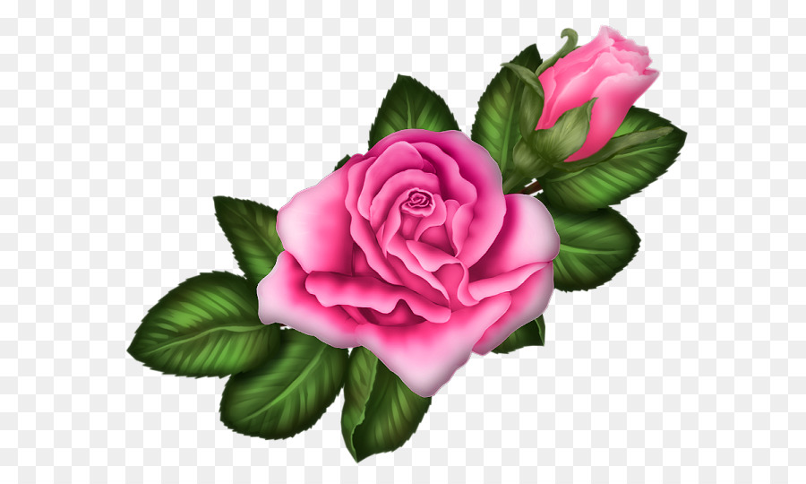 Descarga gratuita de Las Rosas De Jardín, Rosas Centifolia, Rosa Chinensis Imágen de Png