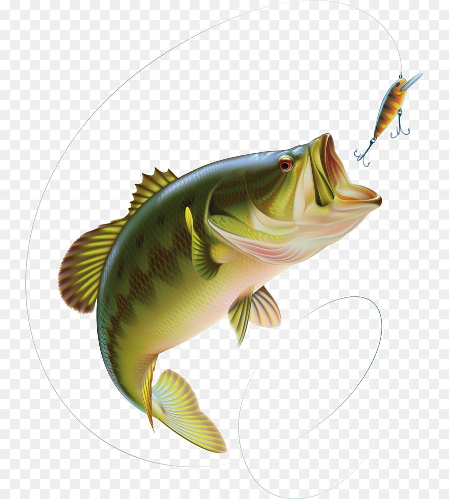 Descarga gratuita de Bajo, La Lobina, Pesca De La Lubina imágenes PNG